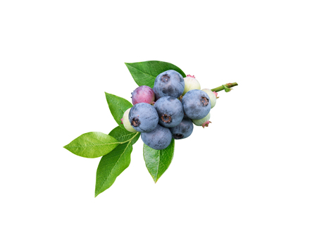 Blueberries and leaves branch isolated on white. Dusky blue wax coating on the berries. Reklamní fotografie