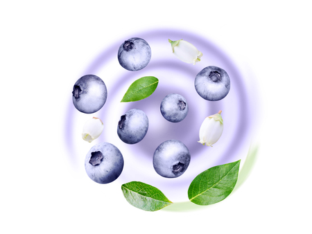 Flying blueberry swirl. Ripe and juicy purple berries, fresh leaves and white flowers on the blurred fruit yogurt background.