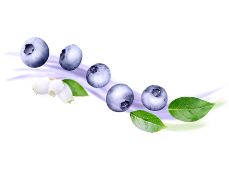 Flying blueberry wave. Ripe and juicy purple berries, fresh leaves and white flowers on the blurred fruit yogurt background.