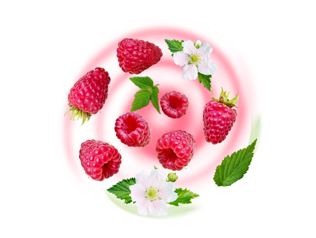 Flying raspberry swirl. Ripe and juicy red berries, fresh leaves and white flowers on the blurred fruit yogurt background.