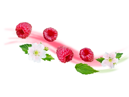 Flying raspberry wave. Ripe and juicy red berries, fresh leaves and white flowers on the blurred fruit yogurt background. Reklamní fotografie