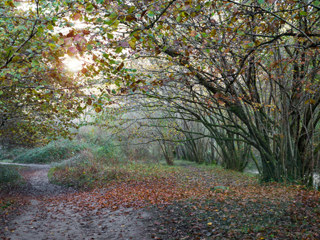 Path covered with the fallen leaves in the autumn forest