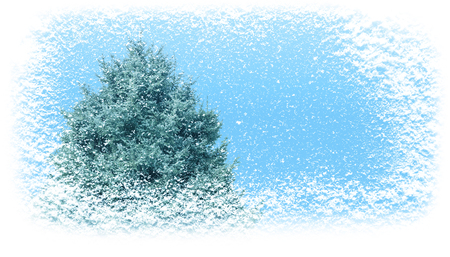 Fir tree in winter covered with snowfall horizontal banner background. Christmas gift card.