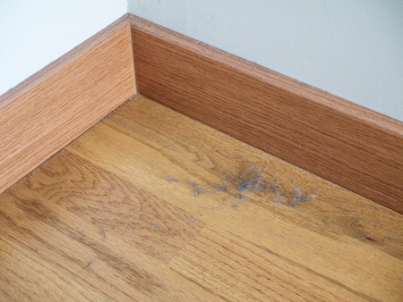 Dust and hairs on the laminate floor in the corner and on baseboard. Dustbunnies. Stock Photo - 117093493