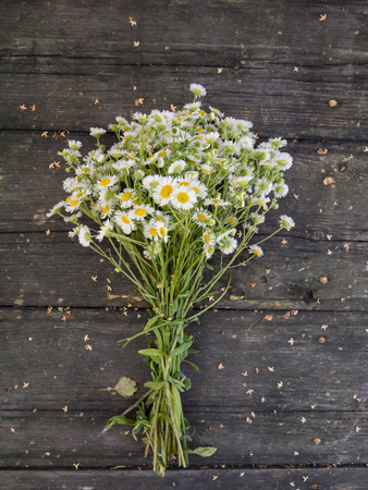 Daisy white yellow-eye flowers bouquet on the old dark weathered wooden planks