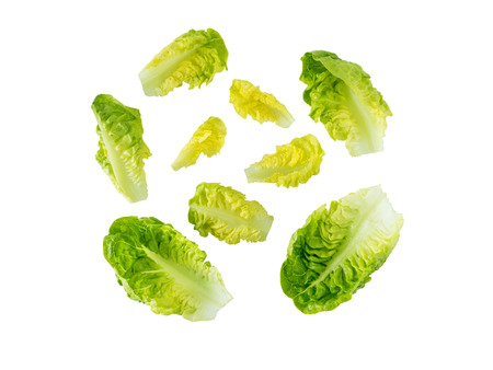 Mini cos lettuce salad leaves isolated on white. Green leafy veggie. Stock Photo