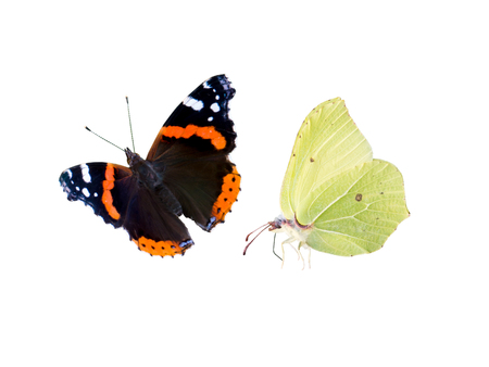 Common brimstone and red admiral butterflies isolated on white. Gonepteryx rhamni and Vanessa atalanta. Reklamní fotografie - 117093680