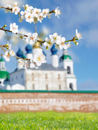 Spring blossom. Cherry tree branch with white flowers. Russian Orthodox Easter blurred bright sunny background.