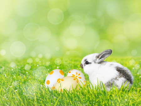 Painted Easter eggs and white rabbit on the fresh green grass lawn spring blurred background Stock Photo