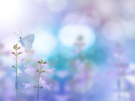 Butterfly and light purple flowers on the colorful blurred background. Floral desktop.