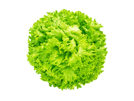 Batavia lettuce salad head isolated on white flatlay top view. Green leafy vegetable. French crisp variety. 版權商用圖片