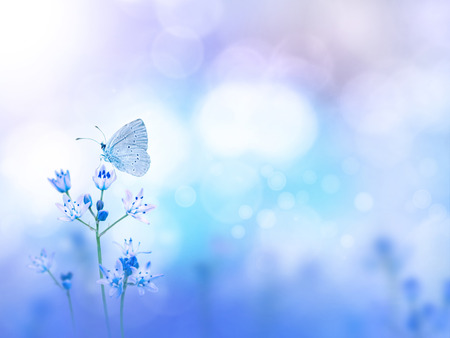 Blue holly butterfly and purple flowers on the turquoise blurred background. Floral desktop.