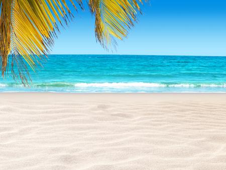 Paraíso de la isla tropical. Hojas de palma de coco que cuelgan sobre la playa de arena y el agua del océano de color turquesa brillante. Orilla lavada por la ola. Destino de vacaciones de verano de ensueño.