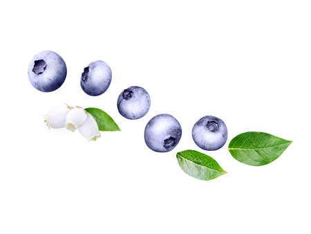 Flying blueberry wave. Ripe and juicy purple berries, fresh leaves and flowers isolated on white. Imagens - 123899330