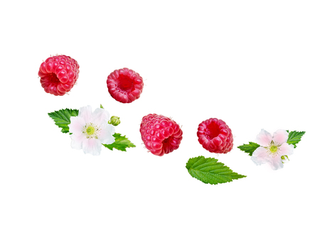 Flying raspberry wave. Ripe and juicy red berries, fresh leaves and flowers isolated on white. Imagens - 123899332