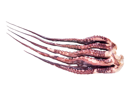 Jumbo flying squid arms isolated on white. Pota or Dosidicus gigas or red devil tentacles.
