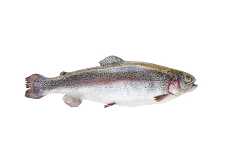 Rainbow trout fish or Oncorhynchus mykiss isolated on white