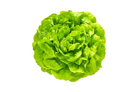 Green trocadero lettuce salad head top view isolated on white