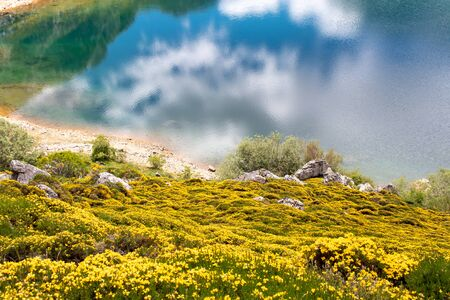 Spring landscape with yellow flowers near the Saliencia mountain lakes. Cueva lake in the Somiedo national park, Spain, Asturias. Clouds reflections in the crystal clear water. Genista occidentalis in bloom.