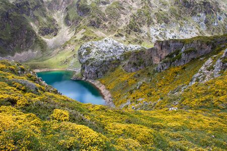 Calabazosa lake in the Somiedo national park, Spain, Asturias. Saliencia mountain lakes. Genista occidentalis yellow flowers. Dark blue water. 版權商用圖片