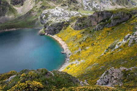 Spring landscape with yellow flowers near the Saliencia mountain lakes. Calabazosa lake in the Somiedo national park, Spain, Asturias. Crystal clear water with ripples. Genista occidentalis in bloom.