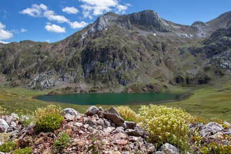 Cerveriz lake in the Somiedo national park, Spain, Asturias. Saliencia mountain lakes. Saxifraga caniculata white flowers. Green water.