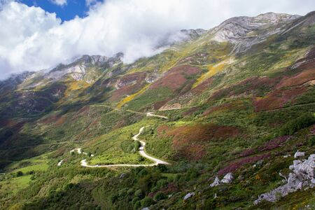 Picturesque landscape in the Somiedo national park, Spain, Asturias. Pink and yellow mountain flowers in the spring. Genista occidentalis and heather plants on the slope. 版權商用圖片