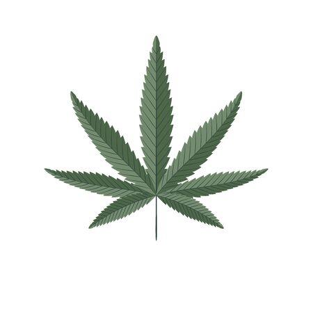 Cannabis green leaf isolated on white. Hemp plant vector illustration.