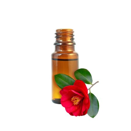 Camellia oil in the dark amber glass bottle and red flower isolated on white.