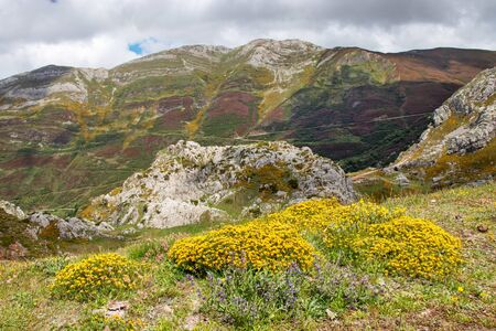 Colorful Landscape in the Somiedo national park. Nature reservation in the Asturias, northern Spain. Spring mountain flowers in full bloom.