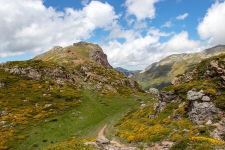 Flowering Landscape in the Somiedo national park. Nature reservation in the Asturias, northern Spain. Spring mountain flowers in full bloom.