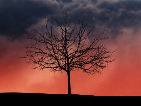 Dramatic night cloudy sky. Sprawling tree silhouette. Halloween background.
