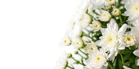 White chrysanthemum flowers and buds in the corner of the white background. 写真素材