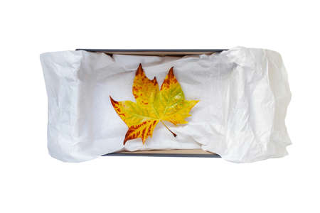 Opened shoes box with crumpled wrapping paper and yellow autumn leaf stop view isolated on white