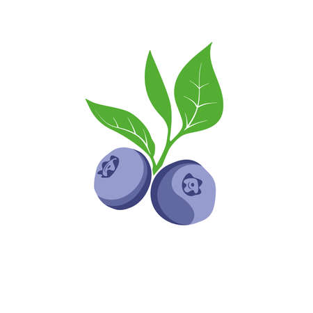 Blueberry berries and leaves branch vector illustration.