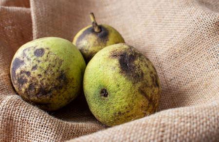 Eastern American black walnut or Juglans nigra friuts on the rough jute canvas.