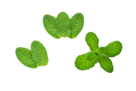 Mint or mentha leaves set isolated on white. Herbal branch.