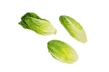 Three fresh green lettuce salad heads isolated on white