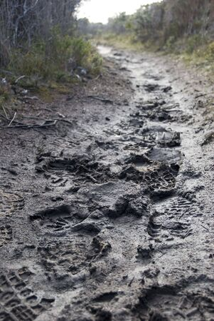 foot prints in the mud on a walking trail Stock Photo - 5711800
