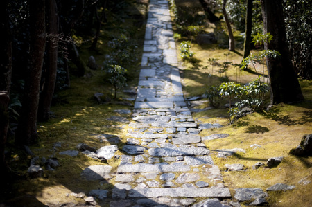 ascendant: Serene Ryan-Ji path in Japan surrounded by moss and tree shadows from sunlight outdoors