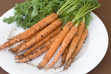 pulled over: Bunches of orange carrots recently pulled from ground with pieces of soil on them over white plate