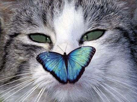 cat eye: Squinting cat with a butterfly on her nose Stock Photo