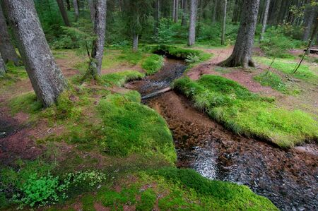 Moos at a brook in a forest with conservation area Stock Photo - 8018789