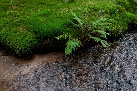 moos: Moos and fern at a little stream in a forest