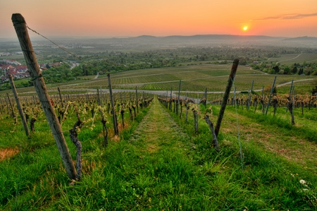 Morning sun in a German vineyard in spring Stock Photo