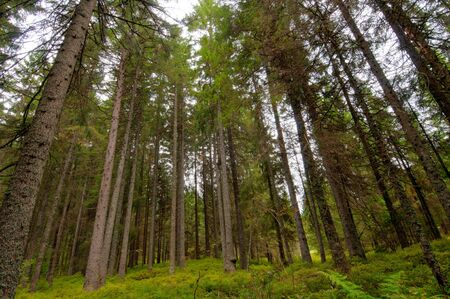 Enchanted forest near Bernau in the black forest