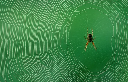 Spider is resting in her spiderweb photo