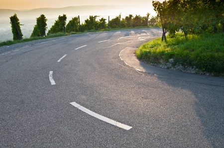 Bend on a road in a German vineyard Stock Photo - 10346016