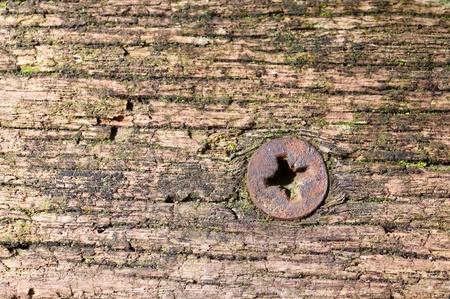 cross recess: Rusty screw in a wooden board
