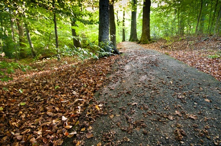 Forest path in forest in Germany Stock Photo - 10877925